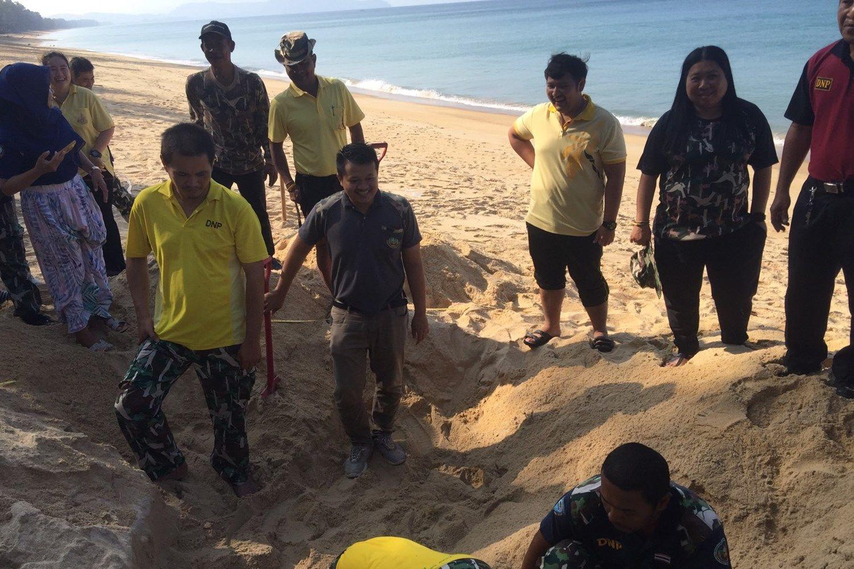ข่าวดี! แม่เต่ามะเฟืองขึ้นมาวางไข่รังที่ 2 บริเวณหาดทรายแก้ว