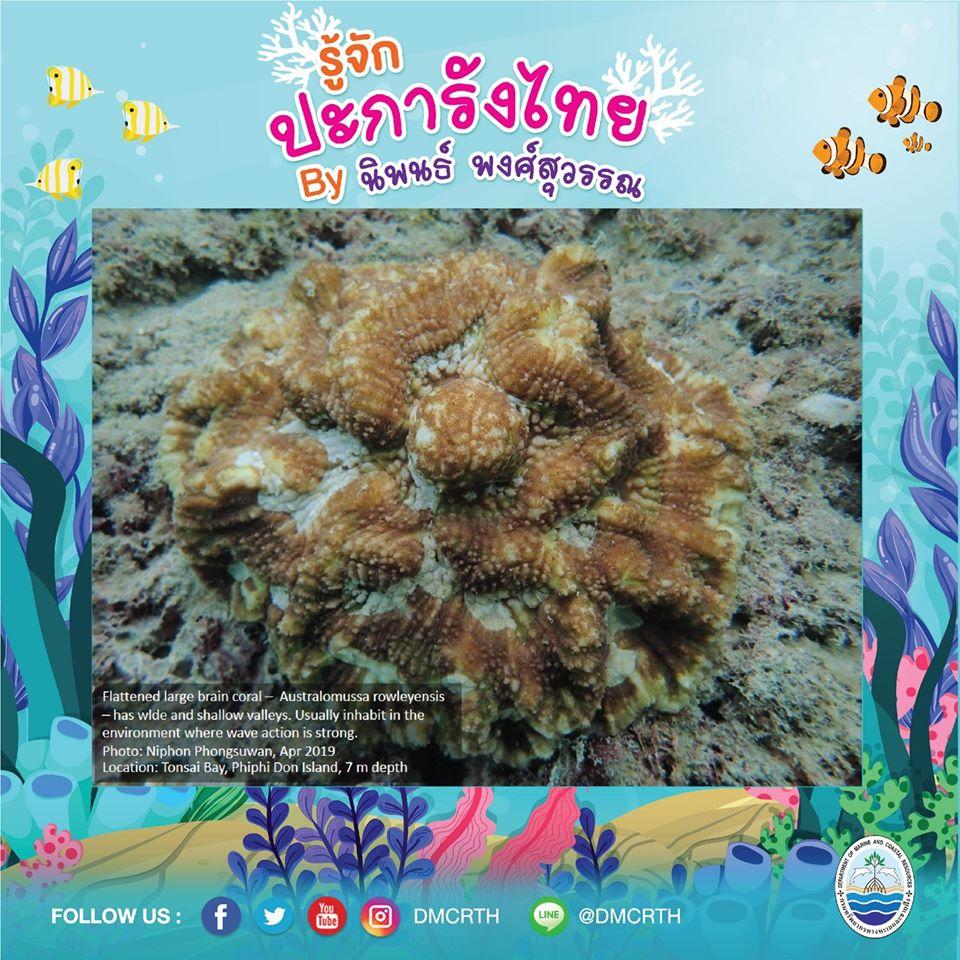 พาท่องโลกใต้ทะเล ทำความรู้จักปะการังวันละตัว #๓๙