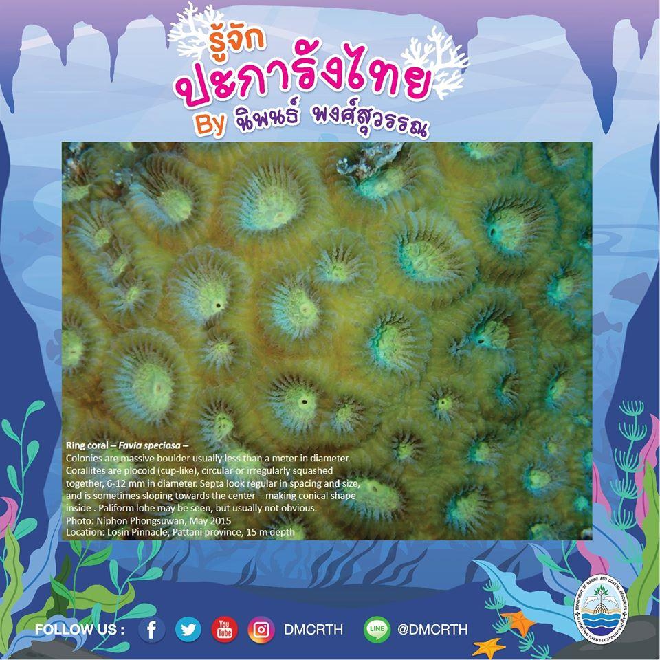 พาท่องโลกใต้ทะเล ทำความรู้จักปะการังวันละตัว #๖๙