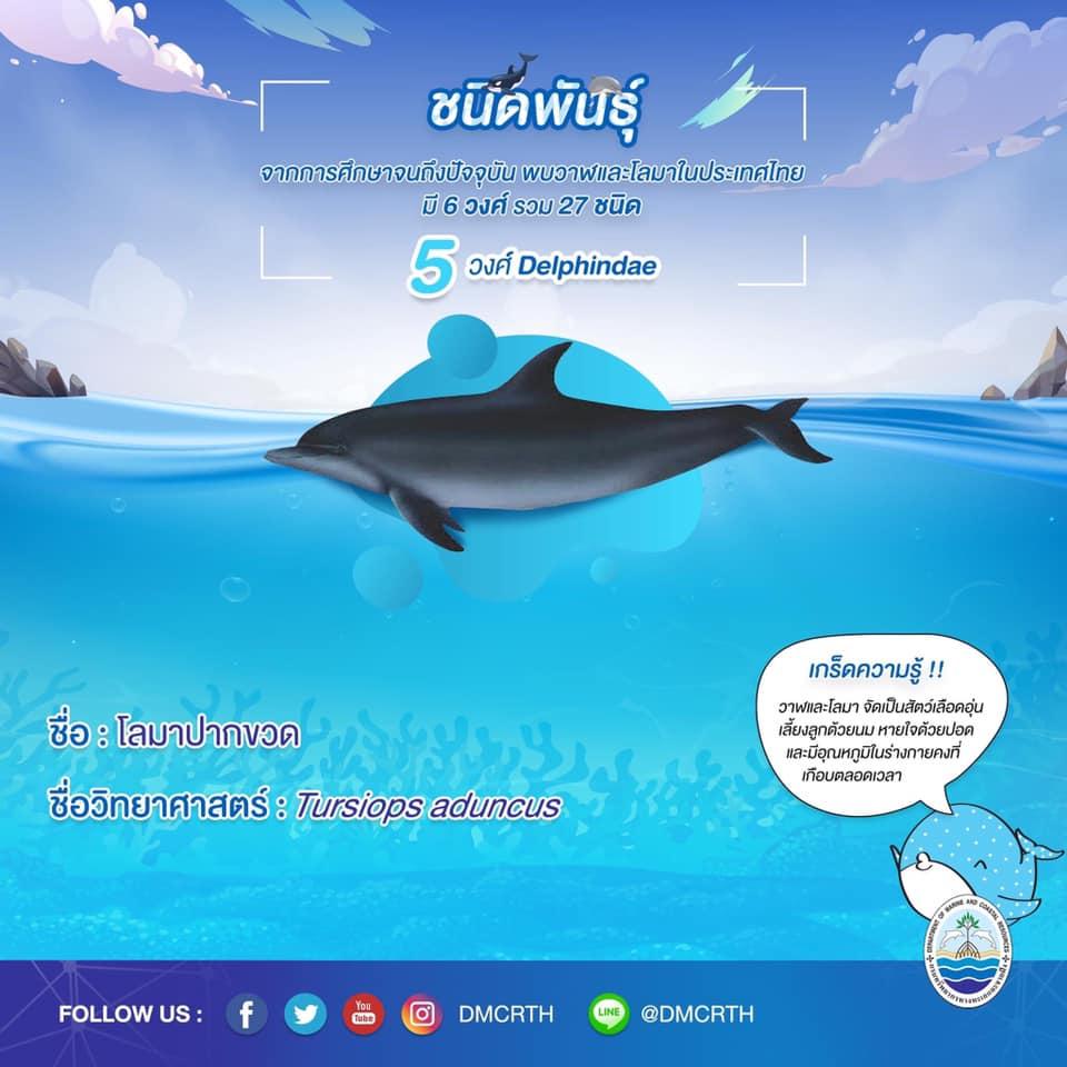 รู้จักเรา รู้จักวาฬ/โลมา วันละชนิด #๑๘ โลมาปากขวด