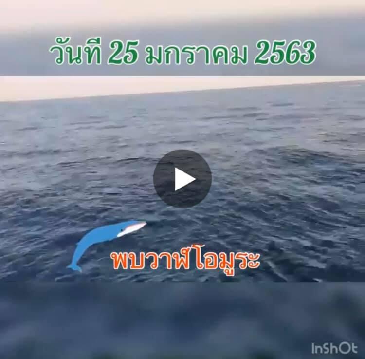 ชมคลิปวาฬโอมูระ ระหว่างเกาะเฮและเกาะราชาใหญ่ ภูเก็ต