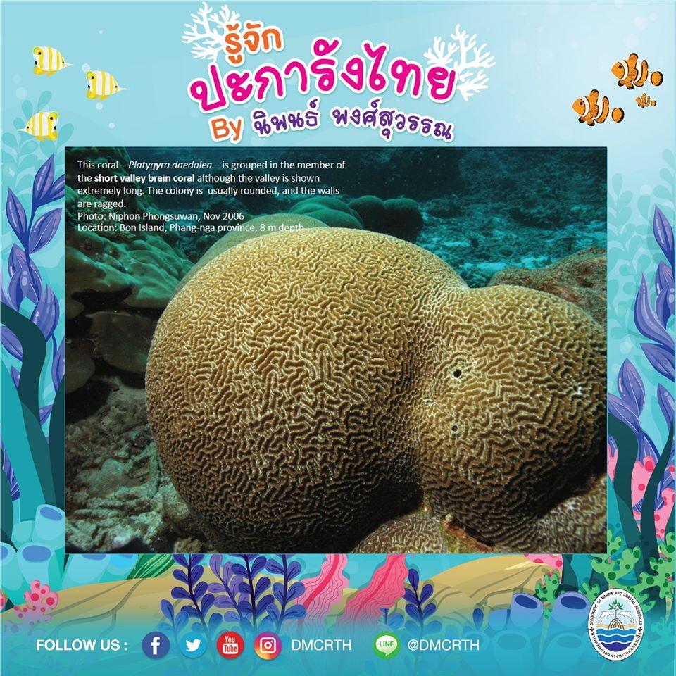 พาท่องโลกใต้ทะเล ทำความรู้จักปะการังวันละตัว #๘