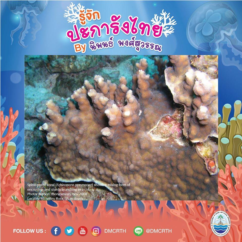 พาท่องโลกใต้ทะเล ทำความรู้จักปะการังวันละตัว #๔๓