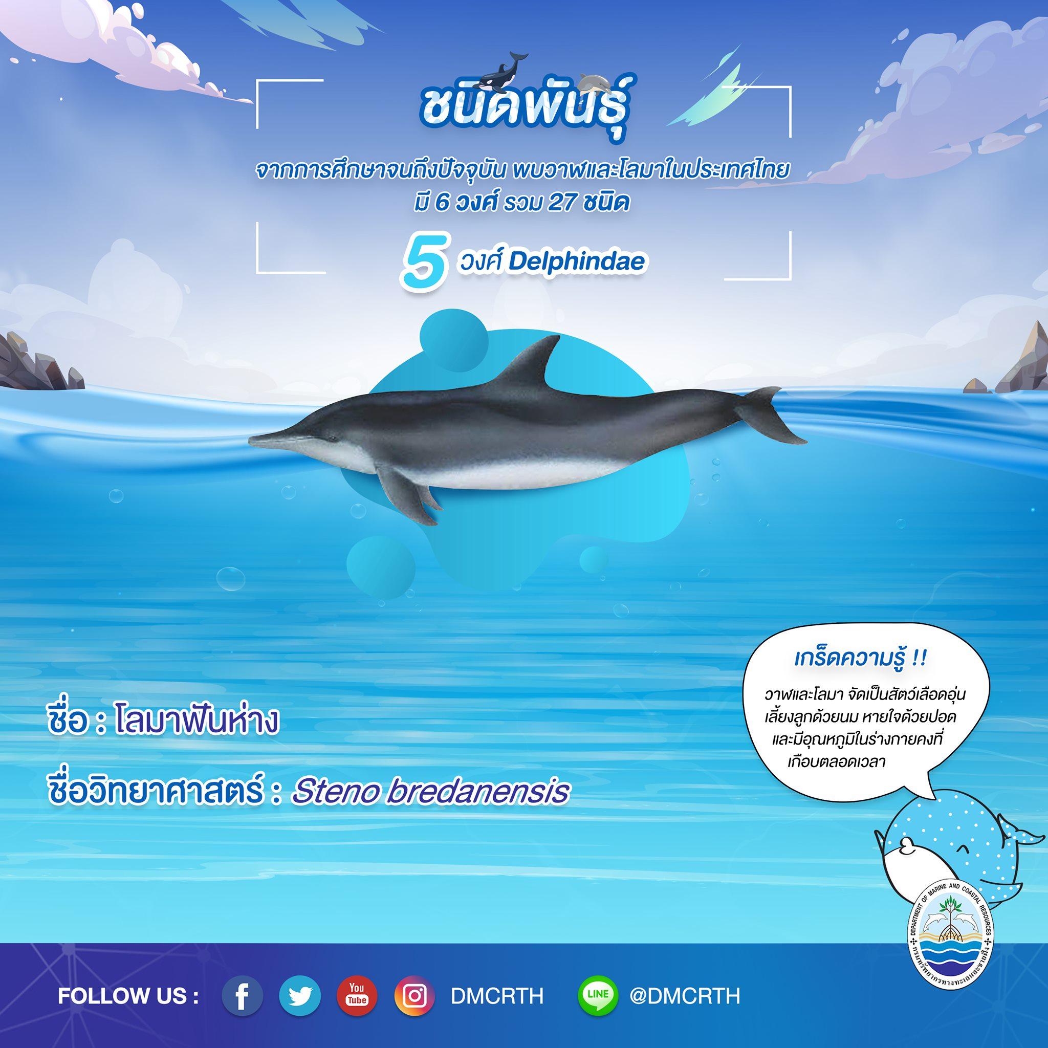 รู้จักเรา รู้จักวาฬ/โลมา วันละชนิด #๑๙ โลมาฟันห่าง