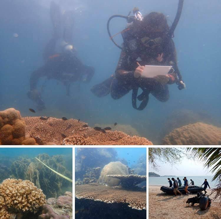 สำรวจปะการังพื้นที่สัตหีบ สภาพสมบูรณ์ดี