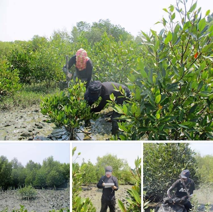สำรวจสภาพแวดล้อมปากทะเล พบพันธุ์ไม้ป่าชายเลนสมบูรณ์
