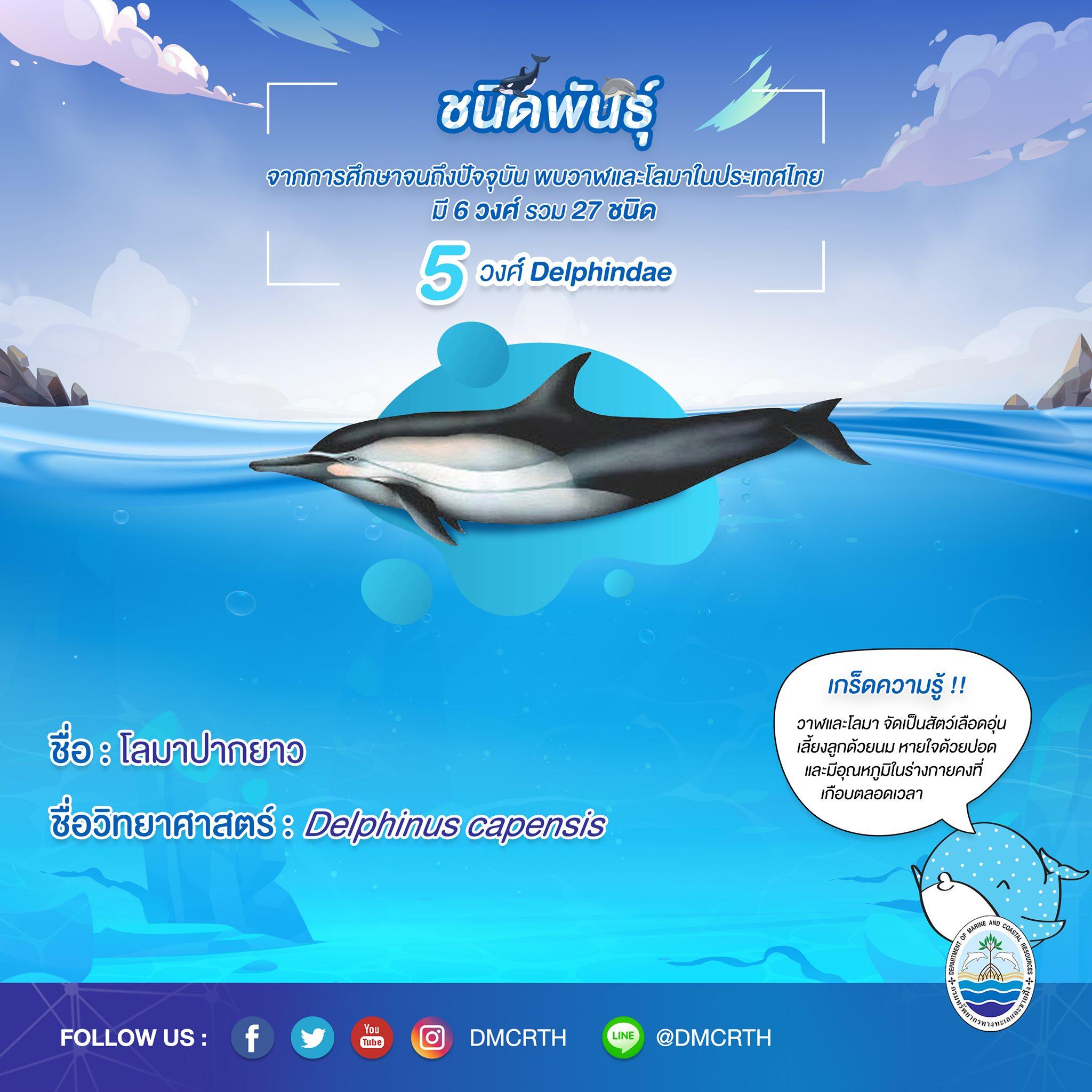 รู้จักเรา รู้จักวาฬ/โลมา วันละชนิด #๒๐ โลมาปากยาว