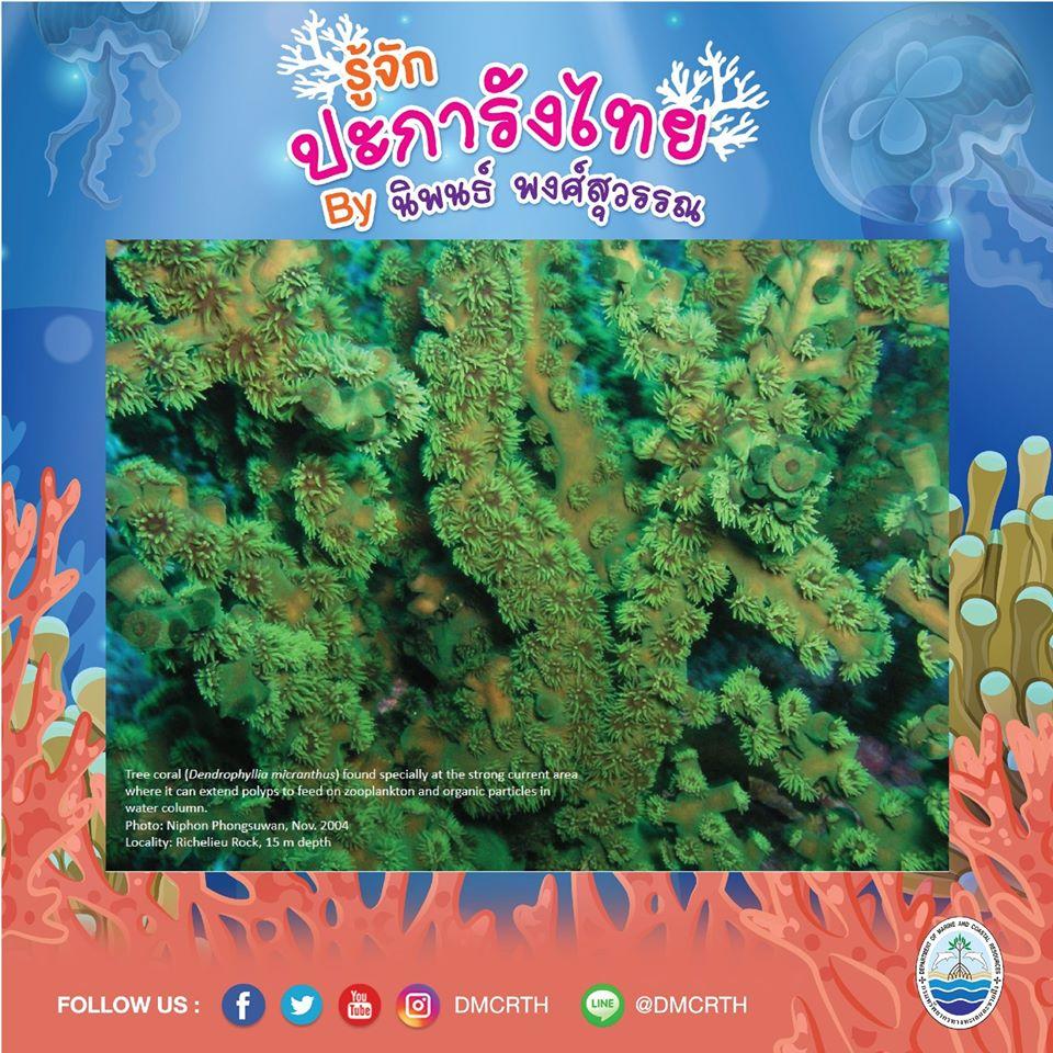 พาท่องโลกใต้ทะเล ทำความรู้จักปะการังวันละตัว #๔๗