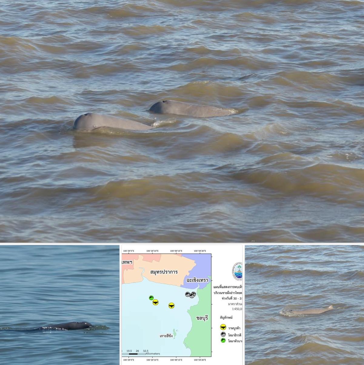 อุ่นใจทะเลอ่าวไทยตัว ก. พบหลากหลายโลมาวาฬ