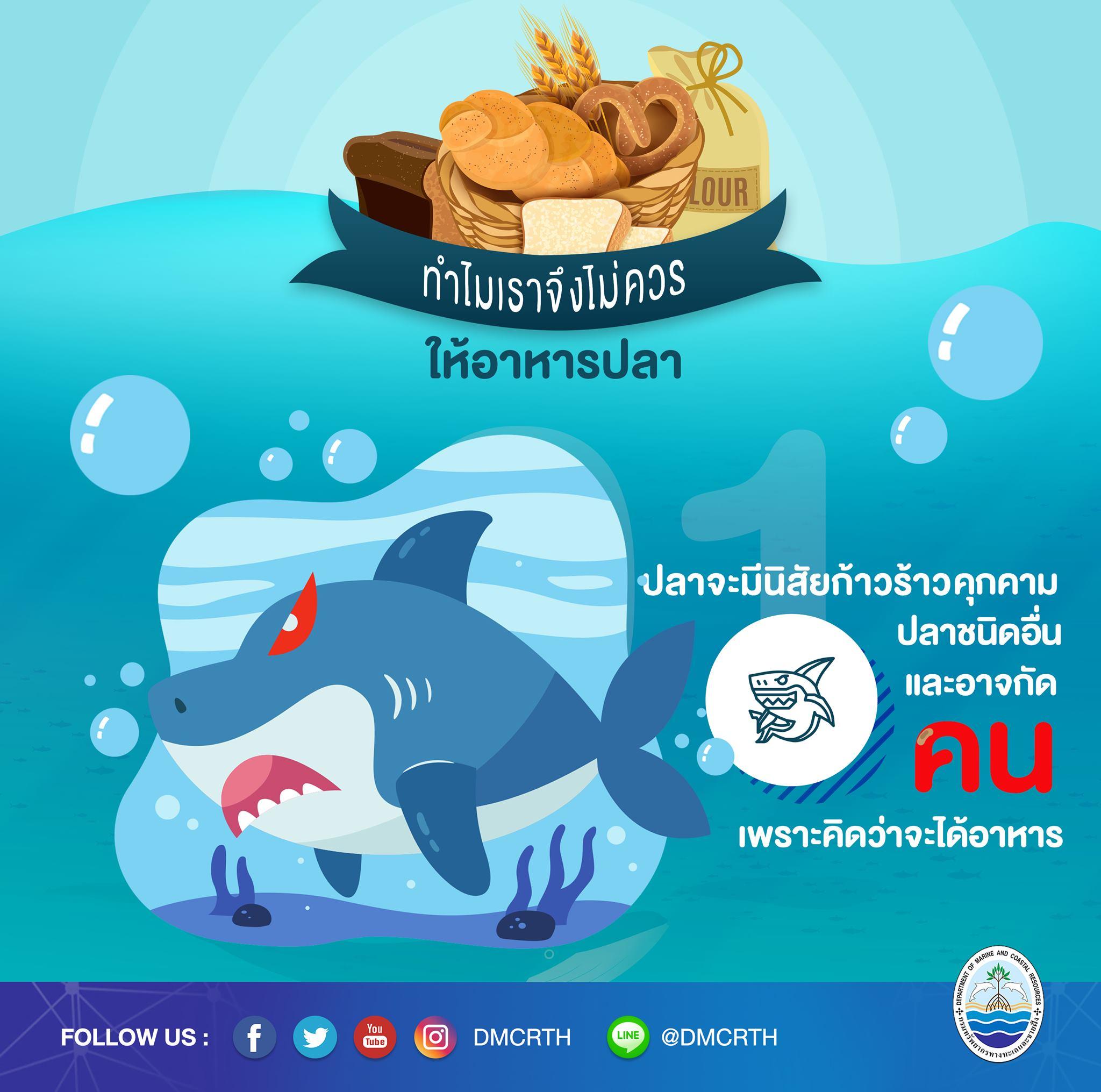 ทำไมจึงควรหยุดให้อาหารปลาในแนวปะการัง ตอนที่๑