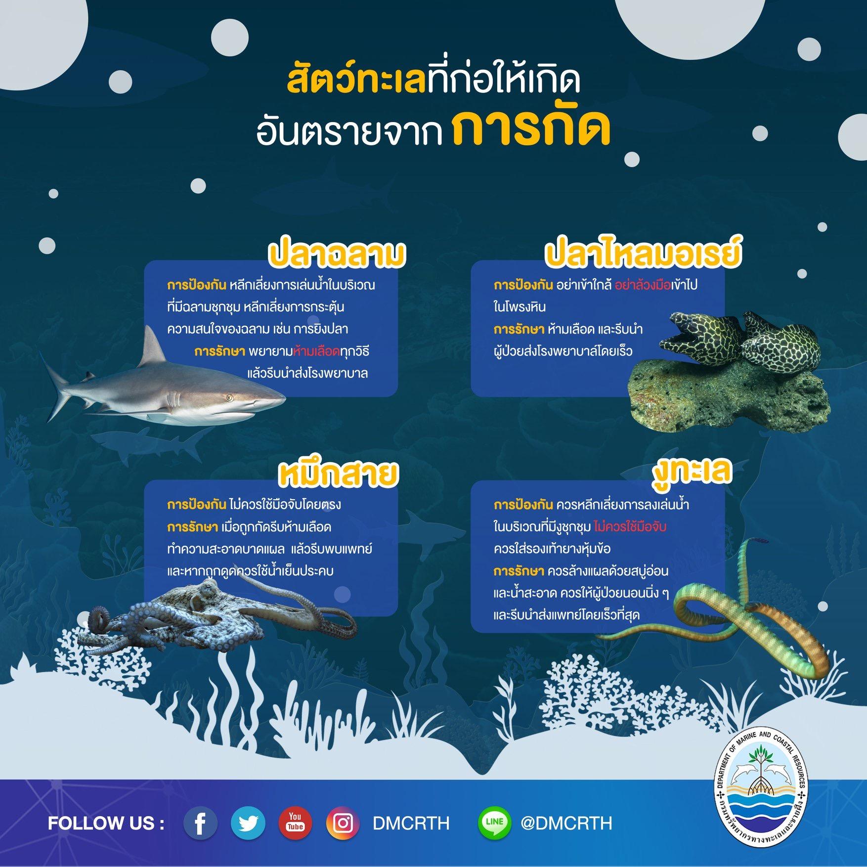เที่ยวทะเลให้ปลอดภัย ระวังภัยจากสัตว์ทะเล : การกัด