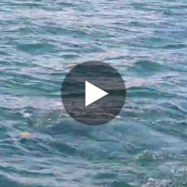 นาทีที่งดงาม พบพะยูนว่ายหากินหญ้าทะเลข้างเกาะระ ทะเลคุระบุรี
