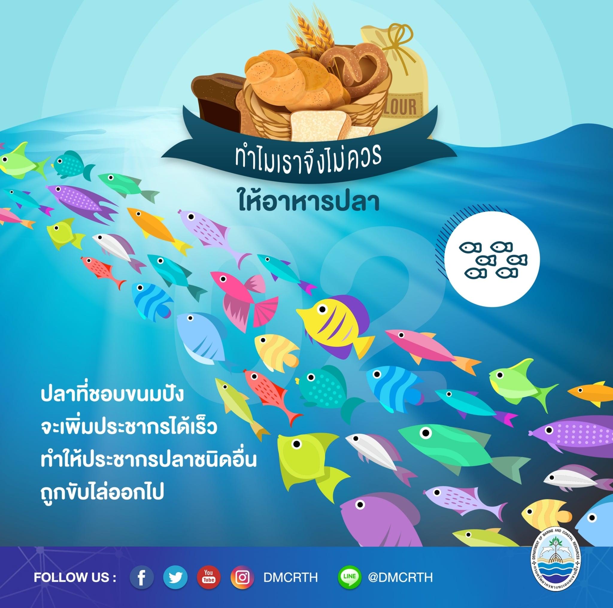 ทำไมจึงควรหยุดให้อาหารปลาในแนวปะการัง ตอนที่๒
