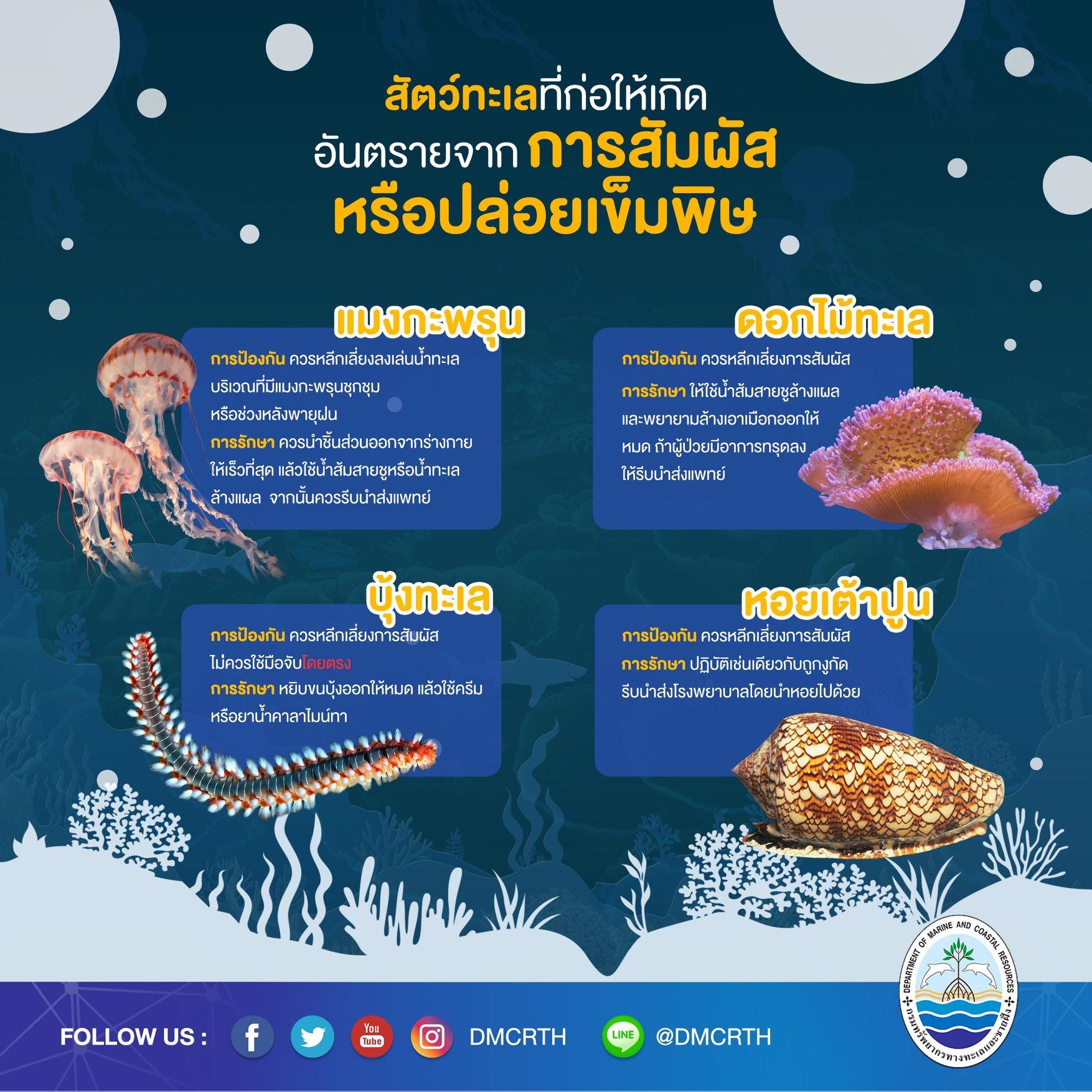 เที่ยวทะเลให้ปลอดภัย ระวังภัยจากสัตว์ทะเล : การสัมผัส