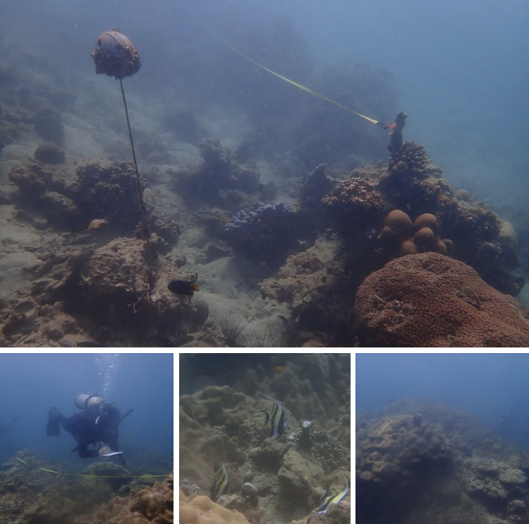 ทะเลเกาะเฮ พบปะการังหลายชนิดส่วนใหญ่ยังสมบูรณ์ดี