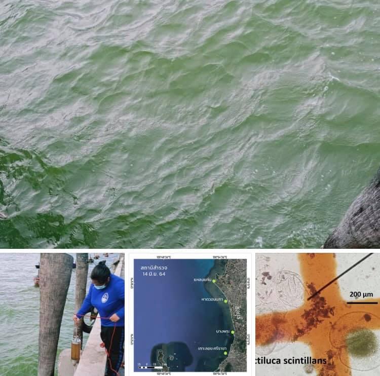 พบอีกน้ำทะเลเปลี่ยนสีในพื้นที่ทะเลบางแสน ชลบุรี