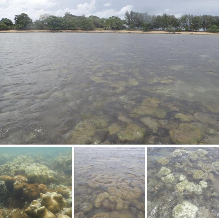 พบปะการังฟอกขาวบริเวณแนวปะการังเกาะมันใน