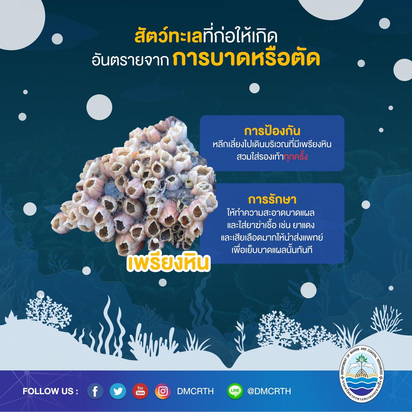 เที่ยวทะเลให้ปลอดภัย ระวังภัยจากสัตว์ทะเล : การบาดหรือตัด
