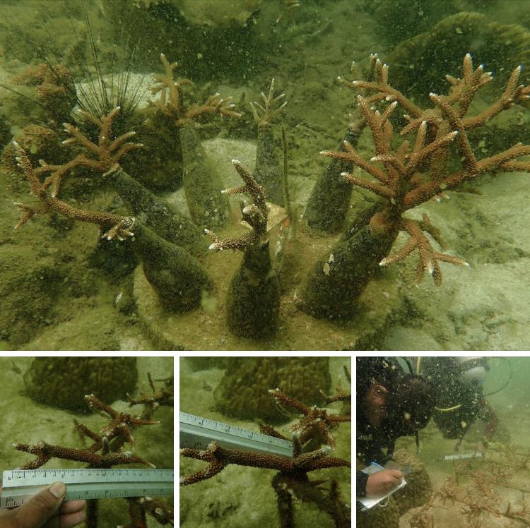 สำรวจ เก็บข้อมูลการฟื้นฟูแนวปะการังเกาะไข่