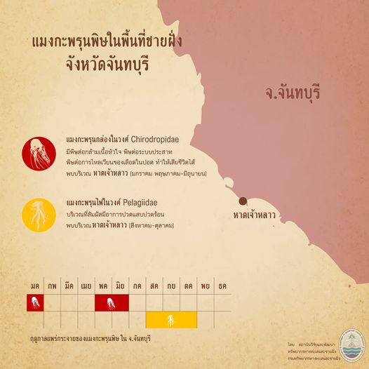 รู้จักกันหน่อยแมงกะพรุนในน่านน้ำไทย ตอนที่ ๒ ทะเลจันทบุรี