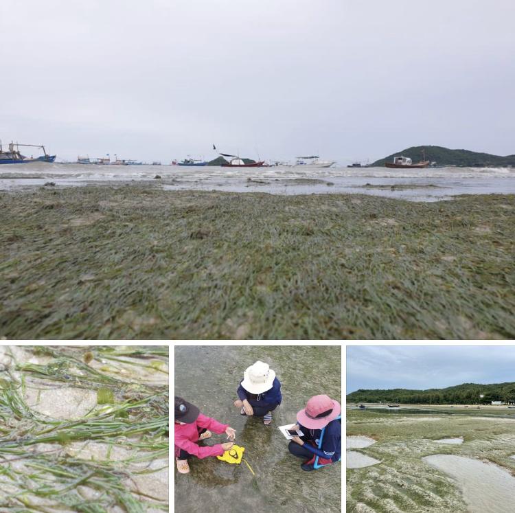 สำรวจแหล่งหญ้าทะเล และถิ่นอาศัยพะยูนที่หาดอาภากร ทะเลสัตหีบ