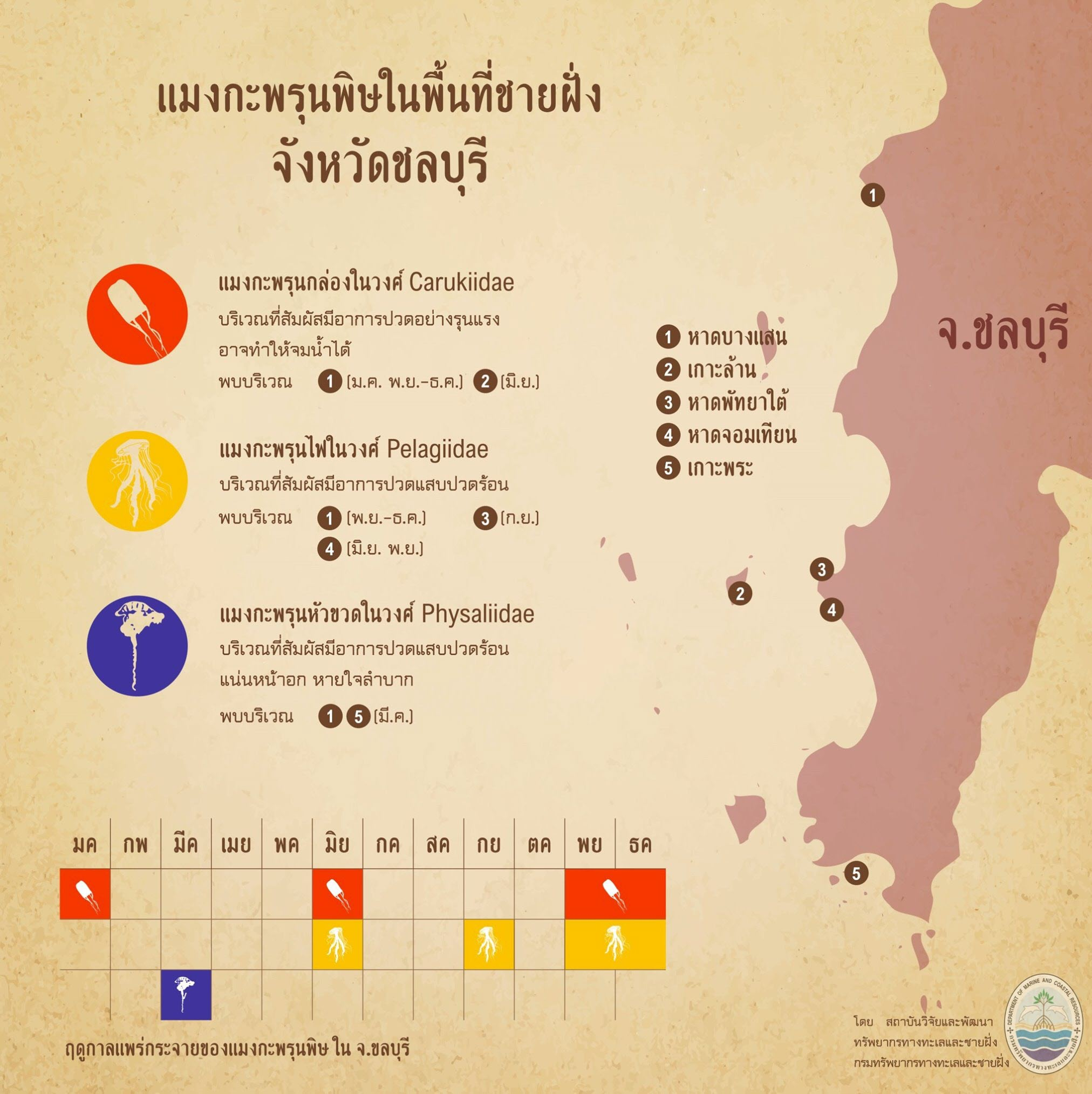 รู้จักกันหน่อยแมงกะพรุนในน่านน้ำไทย ตอนที่ ๔ ทะเลชลบุรี