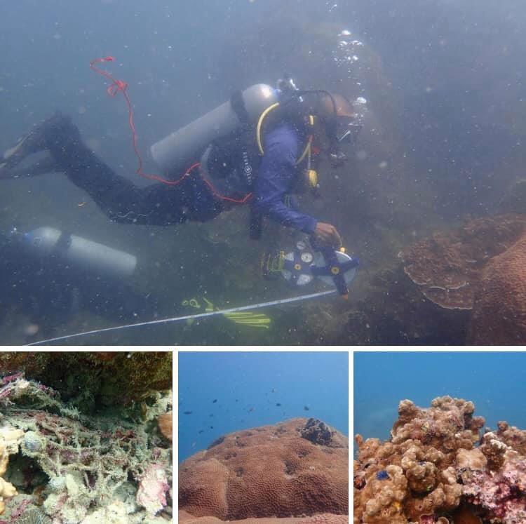 หลากหลายชนิด แนวปะการังสมบูรณ์รอบเกาะเต่า