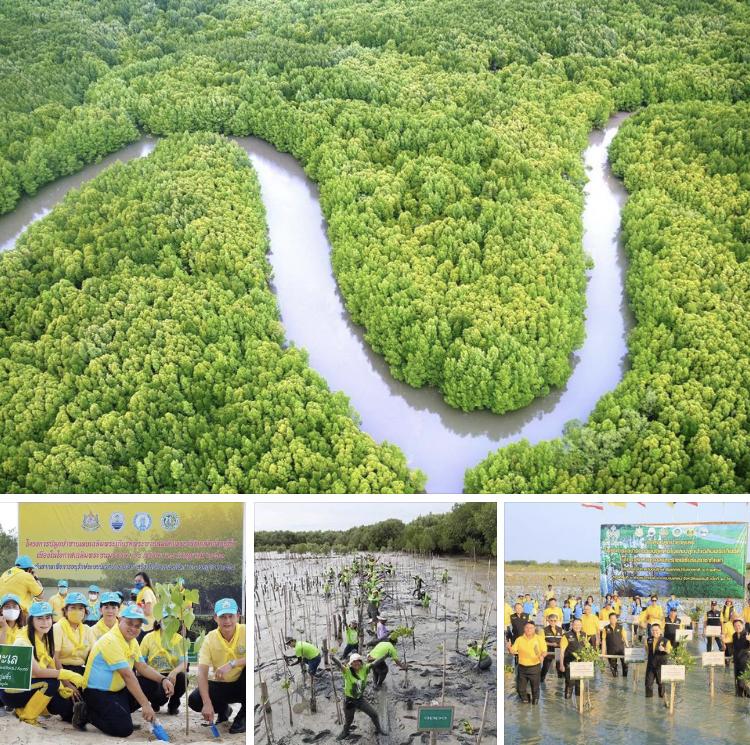 รมต.วราวุธ ย้ำพื้นที่ป่าเพิ่มใน วันป่าชายเลนโลก เป็นผลงานประชาชน กรมทะเลเตรียมแผนร่วมเอกชน เพิ่มพื้นที่ป่าเพื่อคาร์บอนเครดิต