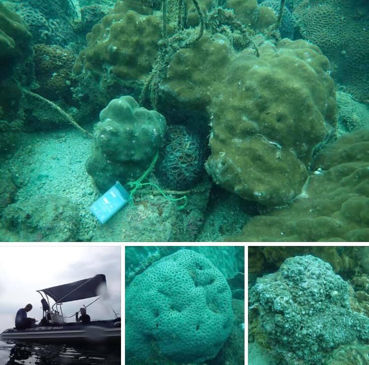 ตามชมความสมบูรณ์แนวปะการัง แหลมคอกวาง