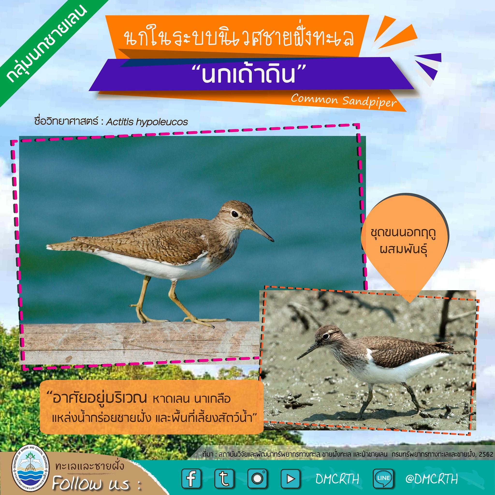 นก ไม่นก ถ้ารู้จักแล้วจะรักนกในระบบนิเวศชายฝั่งทะเลไทย #๑๓