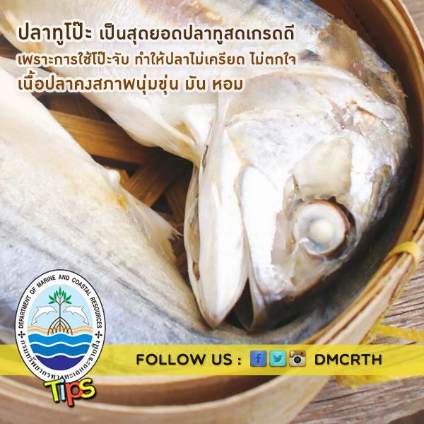 ปลาทูโป๊ะ สุดยอดปลาทูเกรดดี