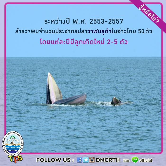 ผลสำรวจจำนวนประชากรปลาวาฬบรูด้าระหว่างปี พ.ศ. 2553 - 2557