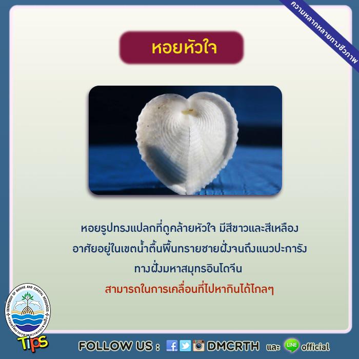 หอยหัวใจ